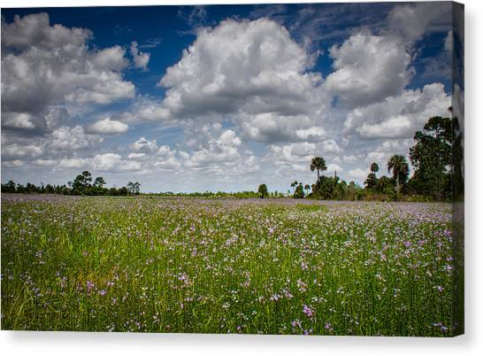Everglades Spring Canvas Print