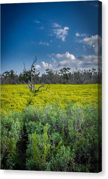 Everglades Tree Canvas Print