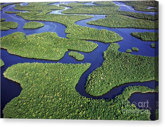 Everglades Waterways Canvas Print