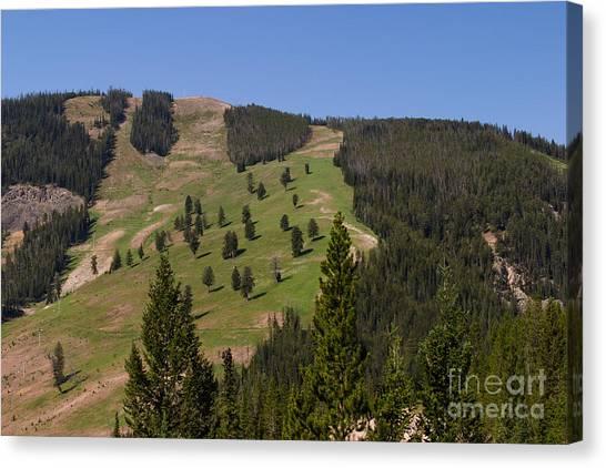 Evergreen Hillside Canvas Print