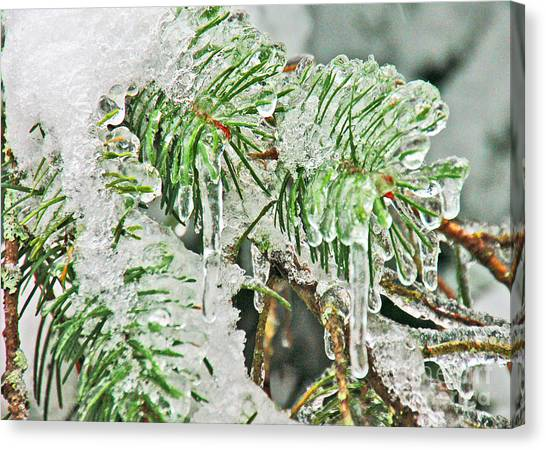 Evergreen Icicles IIi Canvas Print by Chuck Flewelling