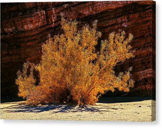 Canvas Print featuring the photograph Every Common Bush by Jeremy McKay