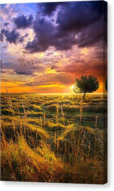 Geese Canvas Print - Every Story Has A Beginning by Phil Koch