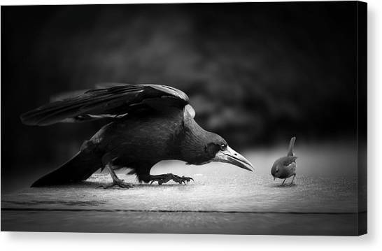 Small Birds Canvas Print - Evil by Richard Bires