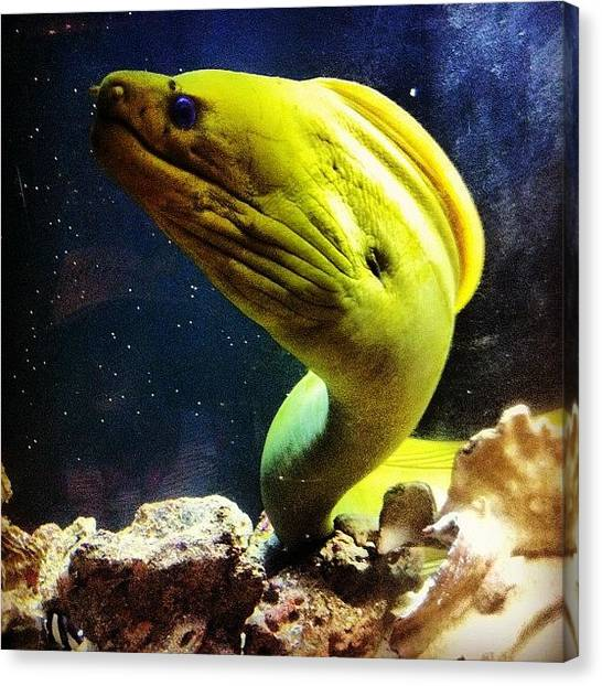 Tanks Canvas Print - Ewww #eel by Laura OConnell