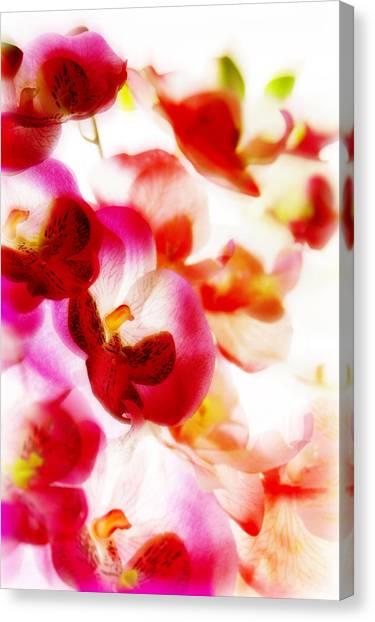 Exotic Dream Canvas Print