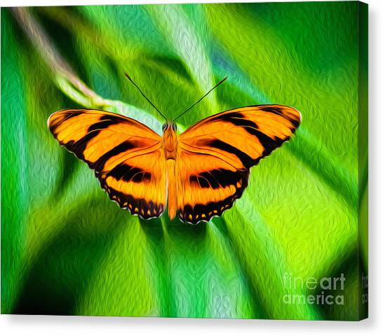 Extended Wings Of The Banded Orange Tiger Heliconian Butterfly  Canvas Print