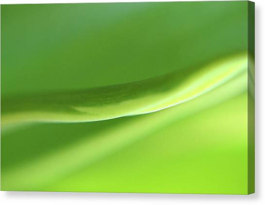 Extreme Close Up Of Blade Of Grass Canvas Print by Sheila Creighton / Eyeem