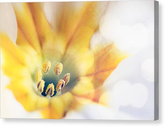 Extreme Close-up Of Flower Pollen Canvas Print by Massimiliano Ranauro / EyeEm