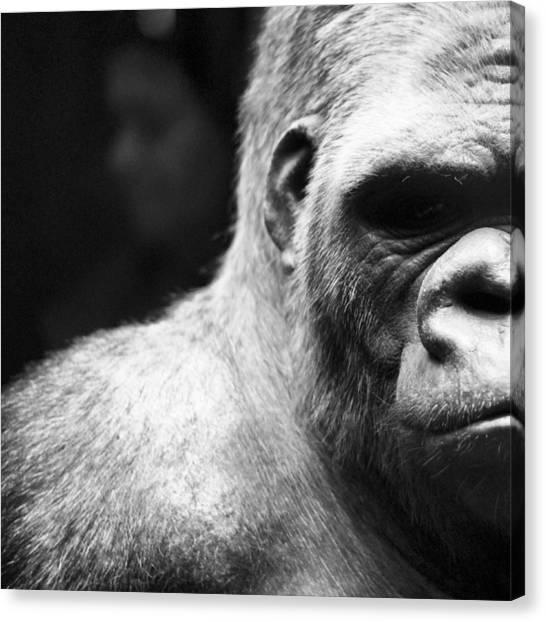 Extreme Close-up Of Gorilla Canvas Print by Ali Roshanzamir / Eyeem