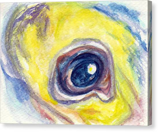 Eye Of Pelican Canvas Print