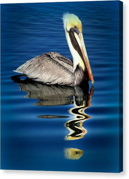 Florida Wildlife Canvas Print - Eye Of Reflection by Karen Wiles