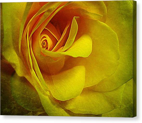 Eye Of Rose Canvas Print