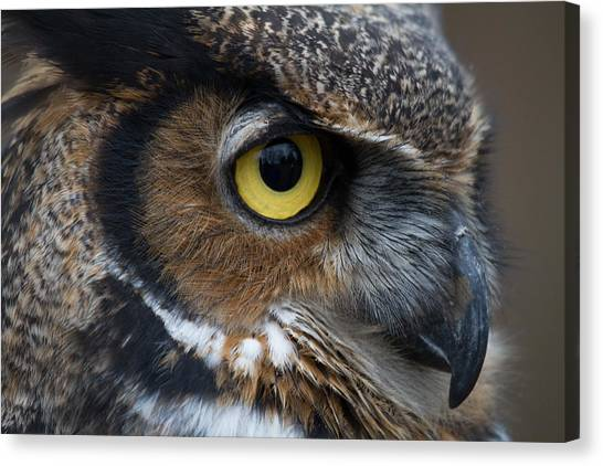 Eye Of The Owl Canvas Print by Craig Brown