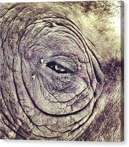 Rhinos Canvas Print - #eye Of The #rhino /// #rhinoceros by Nick Lucey