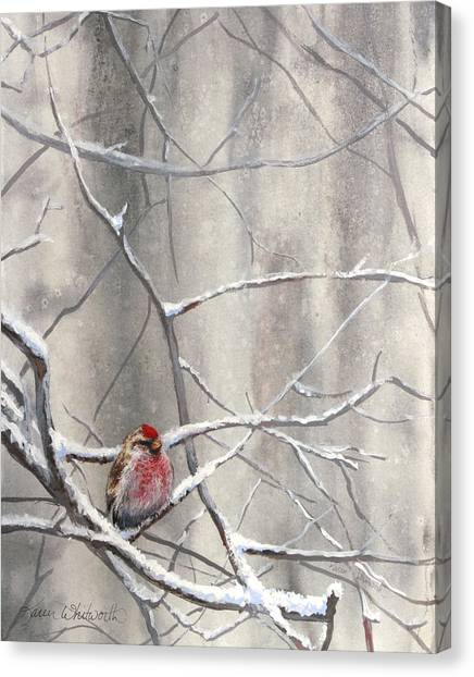 Crossbills Canvas Print - Eyeing The Feeder Alaskan Redpoll In Winter by Karen Whitworth