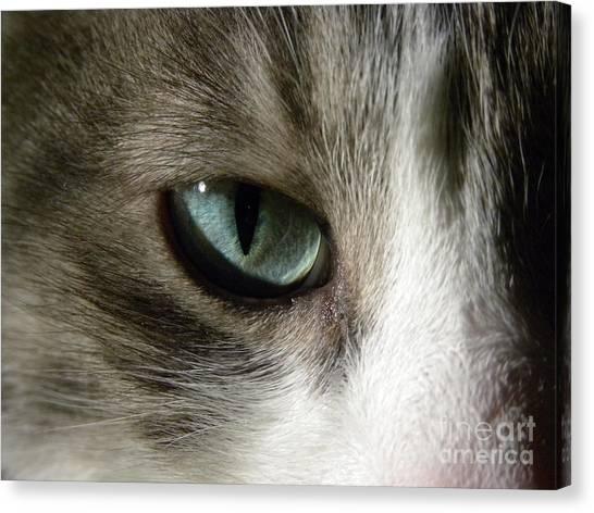 Eyes 3 Canvas Print by Laura Yamada