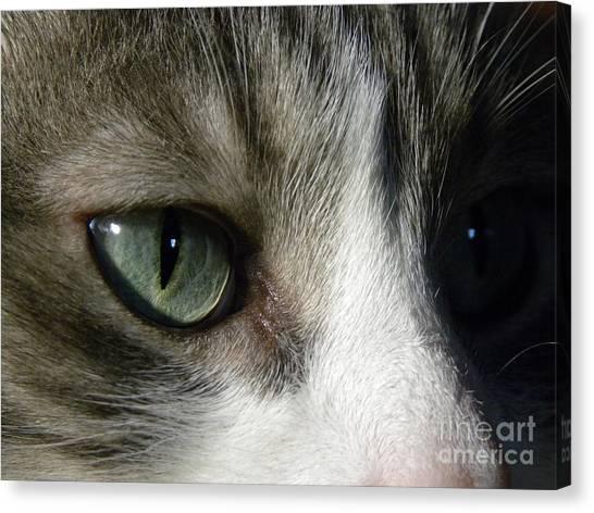 Eyes 5 Canvas Print by Laura Yamada