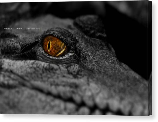 Eyes For You Canvas Print by Andrew Prince