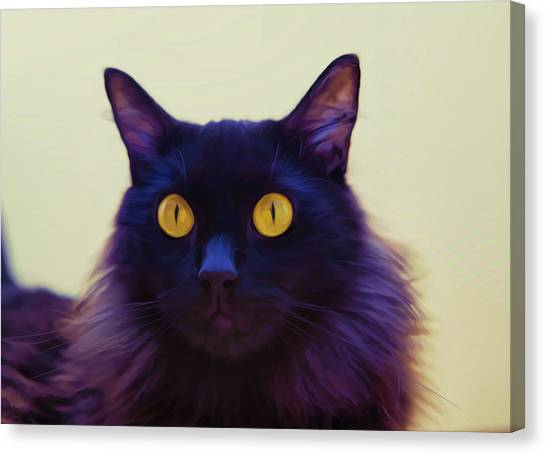 Eyes Canvas Print by Hazel Billingsley