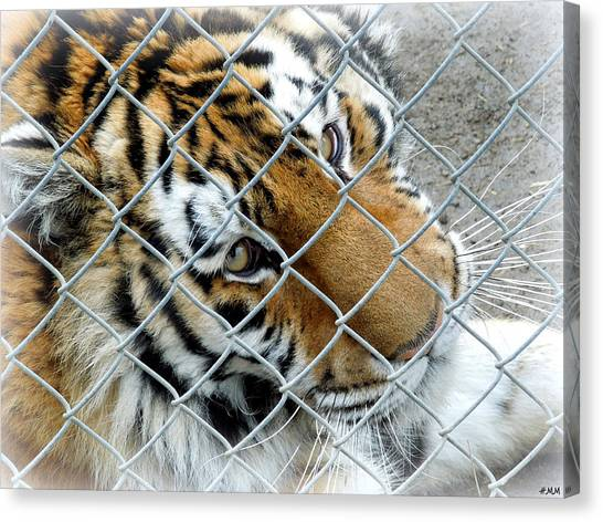 Eyes Of Captivity Canvas Print