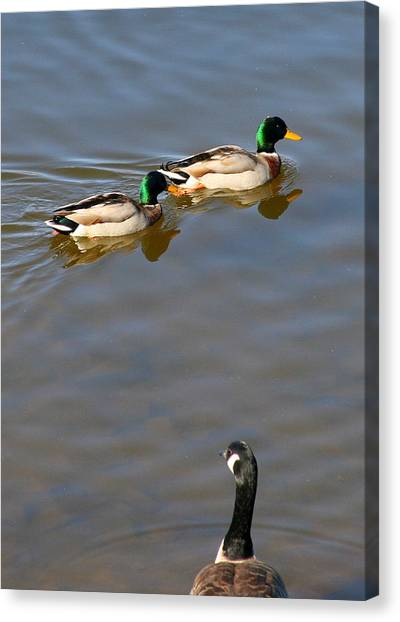 Eyes On The Green Canvas Print