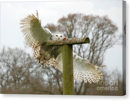 Eyes On The Prize Canvas Print