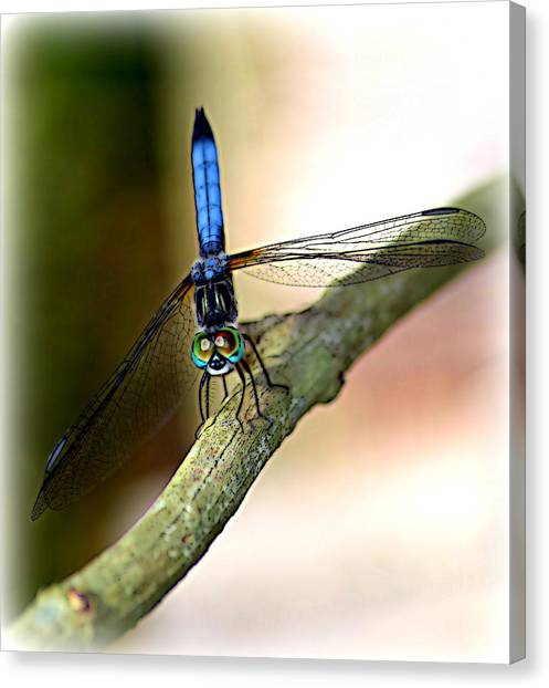 Eyes On You Dragonfly Canvas Print by Sheri McLeroy