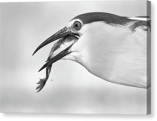 Heron Canvas Print - Eyes by Sufang Wang