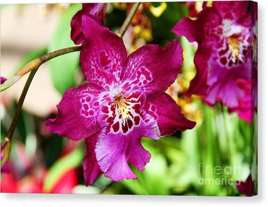 Fabulous Fushia Orchids By Diana Sainz Canvas Print