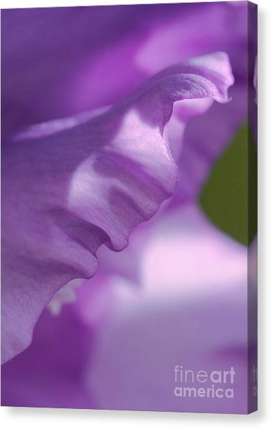 Face In A Glad  Canvas Print by Steve Augustin