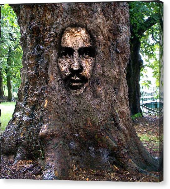 Face In A Tree Canvas Print