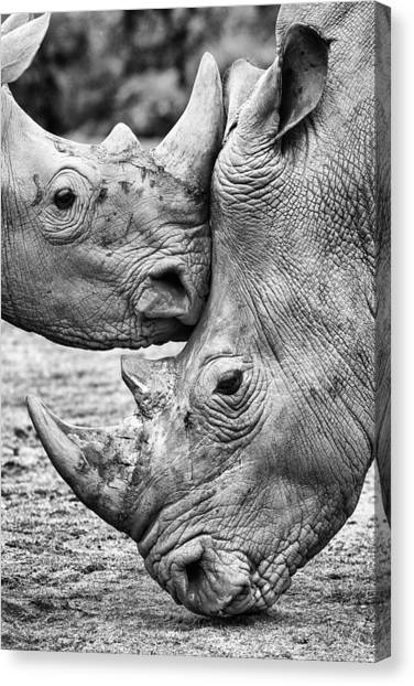 Rhinos Canvas Print - Face To Face by Jesus Concepcion