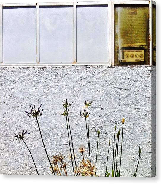 White Canvas Print - Faded Flowers by Julie Gebhardt