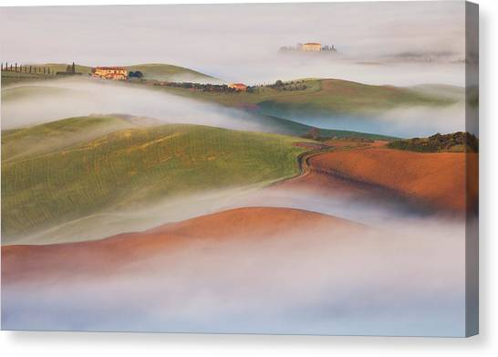 Cypress Canvas Print - Fading Away by