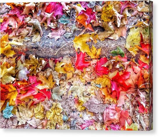 Fallen Tree Canvas Print - Fallen Hues by Marianna Mills