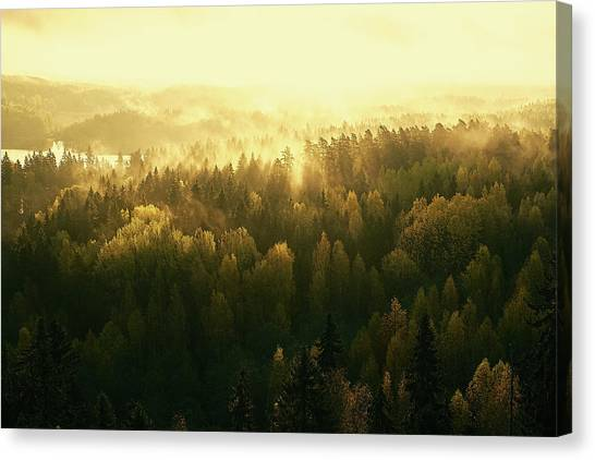 Fir Trees Canvas Print - Fading Mist by Jere Ketola