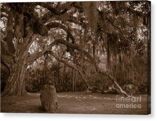 Fairchild Oak Canvas Print