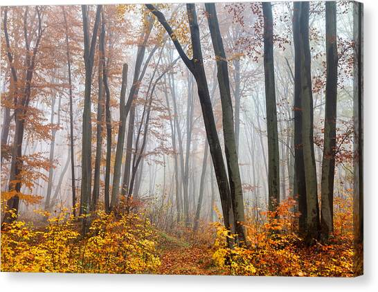 Danube Canvas Print - Fairy Forest by Evgeni Dinev