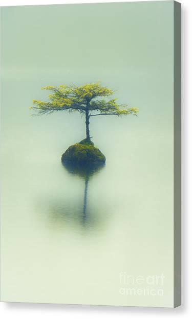 Fairy Lake Fir Canvas Print
