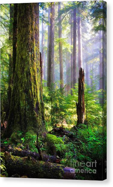 Mossy Forest Canvas Print - Fairy Tale Forest by Inge Johnsson