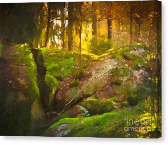 Mossy Forest Canvas Print - Fairytale Forest by Lutz Baar