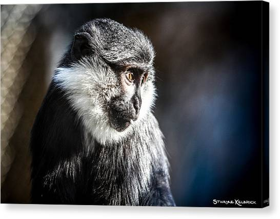 Canvas Print - Fake Wildlife by Stwayne Keubrick