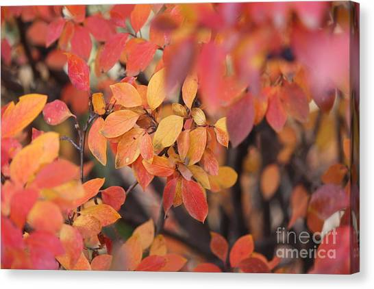 Canvas Print featuring the photograph Fall by Ann E Robson