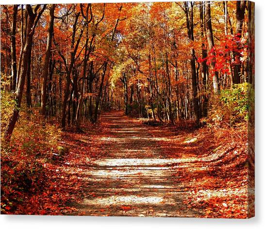 Fall At Cheesequake Canvas Print