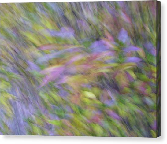 Autumn Azaleas 1 Canvas Print