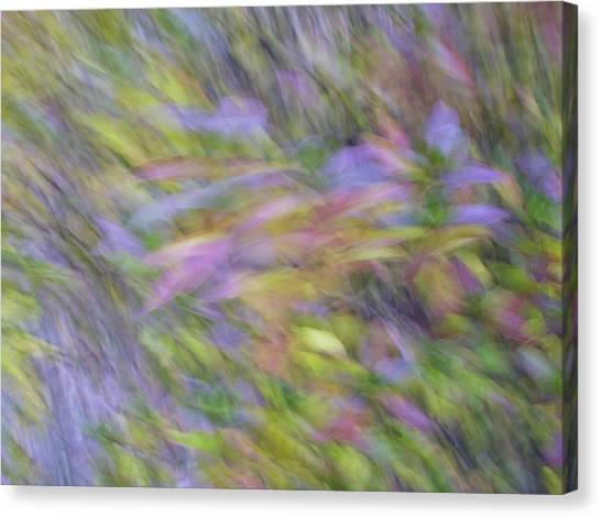 Canvas Print featuring the photograph Autumn Azaleas 1 by Bernhart Hochleitner