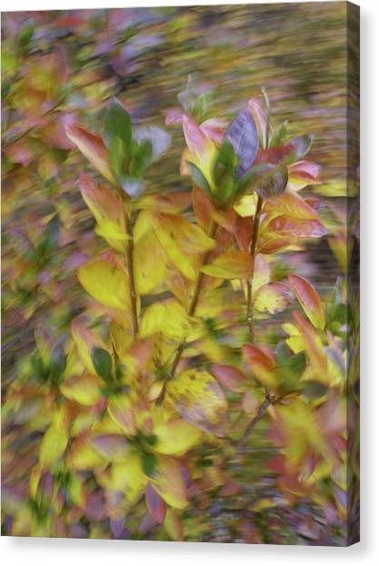 Autumn Azaleas 3 Canvas Print