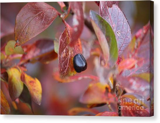 Canvas Print featuring the photograph Fall Berry by Ann E Robson