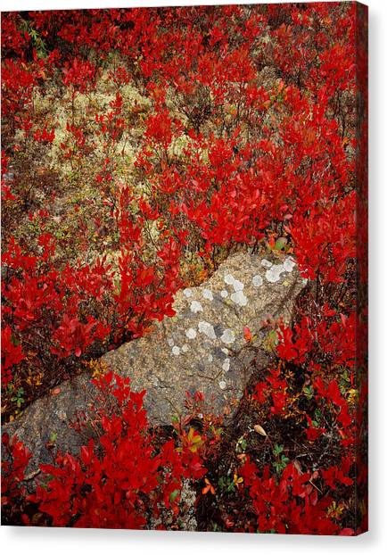 Fall Blueberries And Moss Canvas Print